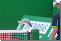 Наглый голубь прервал теннисный матч с участием Надаля