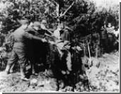 Среди ветеранов ВОВ выявили фашистского карателя