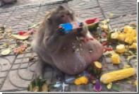 Власти Таиланда заставят похудеть откормленную туристами обезьяну