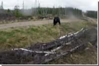 На охотившегося с луком и стрелами канадца набросился медведь