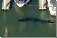 В гавани у побережья Калифорнии застрял кит