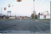 Обесточившего город гуся сняли на видео
