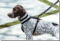 Американские дизайнеры создали люксовые аксессуары для собак