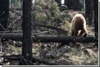 Драку оленя и медведя из-за детеныша сняли на видео