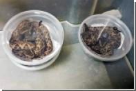 Россиянина задержали в Амстердаме за попытку провоза ядовитых рептилий