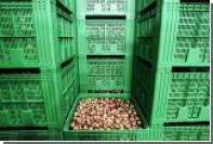 Британские фермеры предупредили о грядущем дефиците фруктов