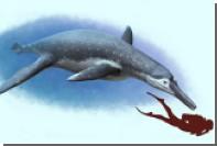 На берегу Волги нашли останки морского чудовища