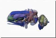 В МГУ изучили органы маленьких размеров