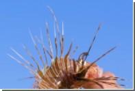 Последствия укуса ядовитой рыбы показали на видео