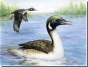 Древняя утка была ровесницей динозавров