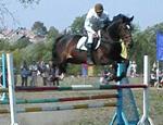 Под Севастополем соберутся всадники и лошади со всей Украины