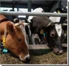 Регулирование цен на молоко навредит крестьянам