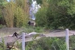 Побег обезьяны из американского зоопарка сняли на видео