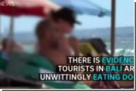 Туристов на Бали накормили собачьим мясом под видом курятины