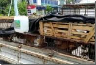 Сотни приготовленных для продажи в рестораны кошек спасли в Китае