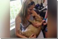 В США 16-килограммовый кот Симба нашел новый дом