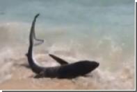 Выбросившаяся на пляж акула вызвала панику среди отдыхающих
