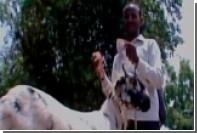 Голодная коза объела хозяина на тысячу долларов