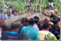 Жители Шри-Ланки связали пятиметрового крокодила и передали его правительству