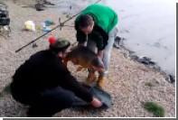 В Чехии пойманный карп уплыл от позировавшего с ним рыбака