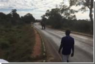 Дикий слон погнался за бегуном