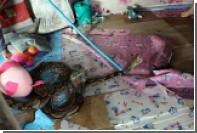 В Таиланде гигантский питон залез в комнату десятилетней девочки