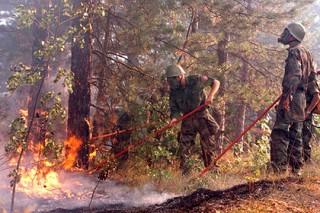 На курортах Хорватии объявили эвакуацию туристов из-за лесных пожаров