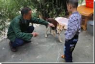 В китайском городе ввели правило «одна семья — одна собака»