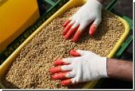 Корпорация МСП поможет избавиться от импортной сои