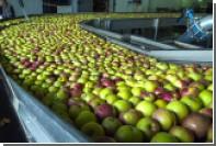 Польские фермеры решили выращивать яблоки в Смоленской области