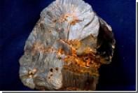Найдены останки древнейшего шляпочного гриба
