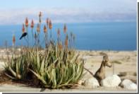 На дне Мертвого моря нашли следы древней катастрофы