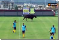 Корова прервала футбольный матч в Болгарии