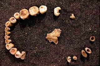 Первобытные люди занимались профилактикой кариеса еще до земледелия