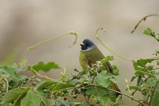 Фрукты поменяли свои цвета для привлечения птиц