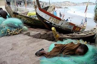Пиратство и работорговлю увязали с исчезновением животных