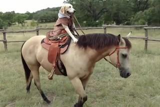 Техасская собака научилась ездить верхом