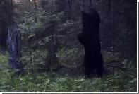 Танец медведя возле дерева в «Столбах» попал на видео