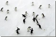 Туристам предложили 12-часовые туры в Антарктику за 10 тысяч долларов