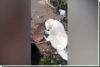 В США пес вытащил из воды тонущего олененка