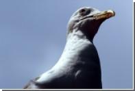 Выгуливающую чайку на поводке британку задержали за жестокое обращение