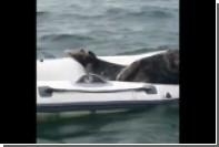 В Ирландии ленивый тюлень прилег отдохнуть в лодке