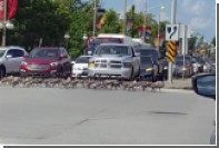Переходившая дорогу в Канаде стая гусей попала на видео