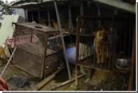 Защитники животных спасли 149 собак с мясной фермы в Южной Корее