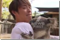 Решившую кусаться коалу силой оттащили от японского спортсмена