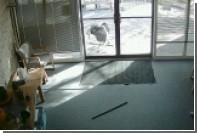 Козел пробил рогами стекло офиса в США