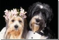 В Италии собакам запретили носить обручальные кольца