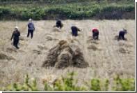 Северокорейцам предрекли голод из-за сильнейшей за 16 лет засухи