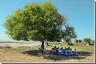 В Индии за полдня посадили 66 миллионов деревьев