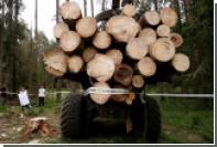 Суд ЕС заинтересовался вырубающими Беловежскую пущу поляками